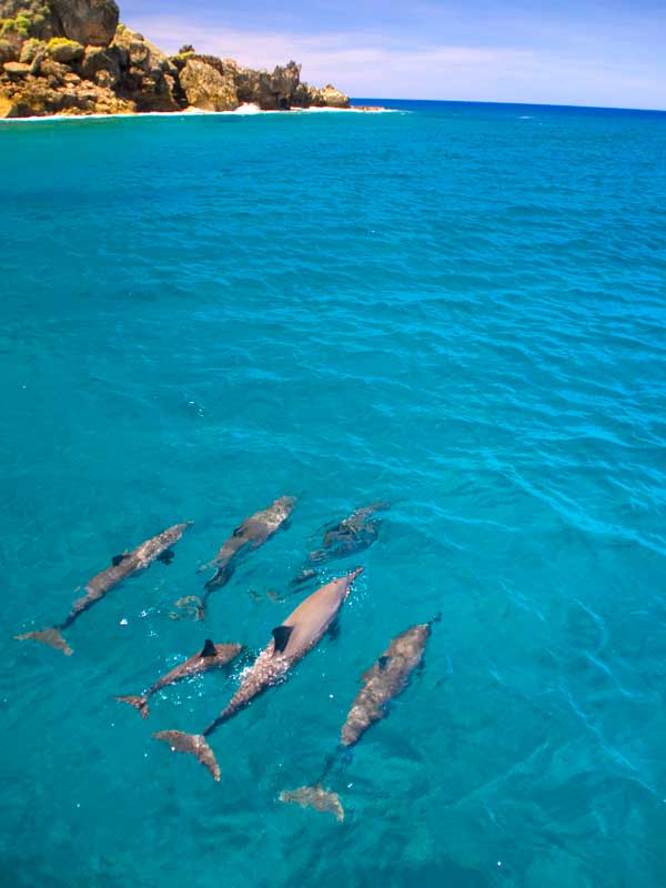 Private Course Dolphin Watching