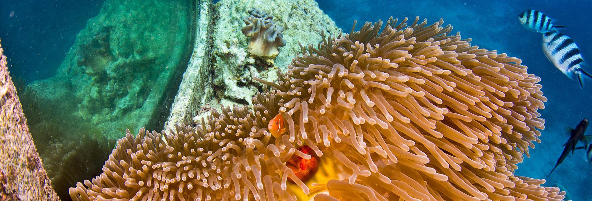 Underwater Observatory Image 2